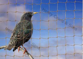 Knotted 28mm Starling Netting